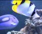 深圳海水鱼鱼缸定做厂家/深圳大型海水生态鱼缸设计公司/