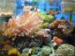 鱼缸设计,珊瑚海水鱼缸定做,生态过滤设备器材,深圳订做鱼缸